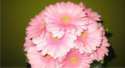 floriseria en madrid
